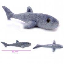 Tiburón manchado